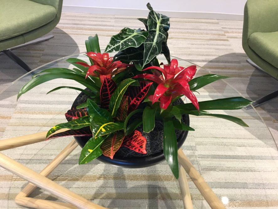 Small Potted Color Plants